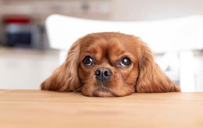 Umgangsrecht: Kein Anspruch auf Umgang mit Hund nach Scheidung